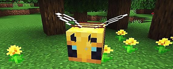 我的世界蜜蜂怎么养